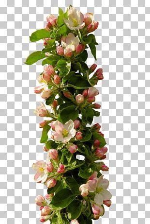 Floral Design Blossom PNG