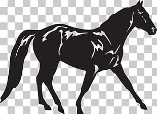 Appaloosa Missouri Fox Trotter American Quarter Horse Tennessee Walking Horse Standing Horse PNG