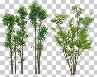 Tree Plant Drawing Architecture PNG