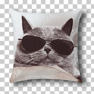 British Shorthair Kitten Funny Animal Stock Photography Cat Litter Trays PNG