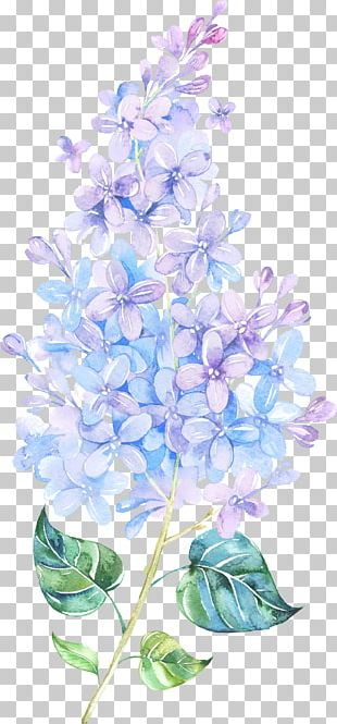 Flower Lilac Watercolor Painting Purple PNG