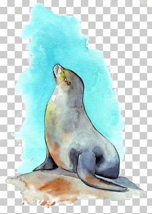 Sea Lion Watercolor Painting PNG