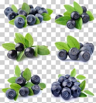 Blueberry Fruit Bilberry Lingonberry PNG