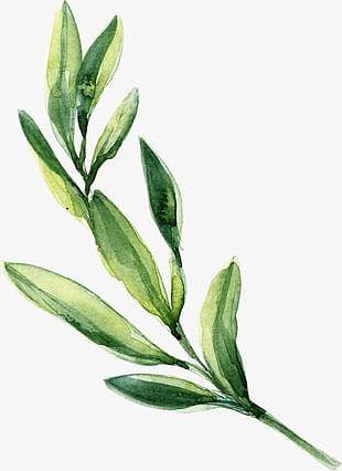 Watercolor Leaves Green Leaves PNG