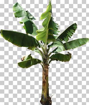 Banana Bread Musa Acuminata Banana Cake Tree PNG
