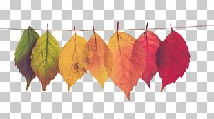 Mood Board Autumn Leaf Color Marketing PNG