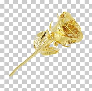 Gold Pink Rose Insect Color PNG