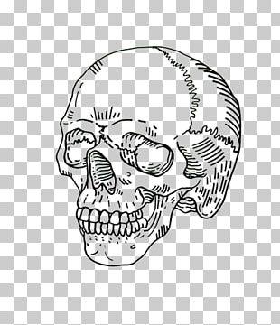 Human Skull Symbolism Drawing Skeleton PNG