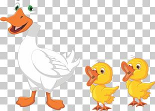 Duck Drawing Cartoon Goose PNG