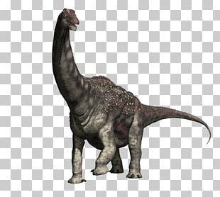Diamantinasaurus Dinosaur Size Tyrannosaurus Compsognathus Brachiosaurus PNG
