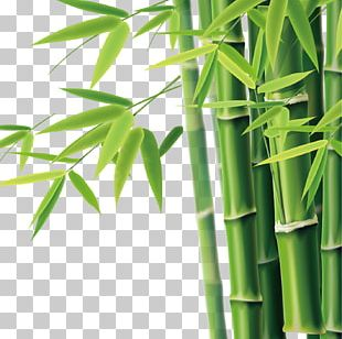 Bamboo Bamboe Icon PNG