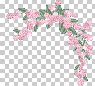 Flower Floral Design Color PNG
