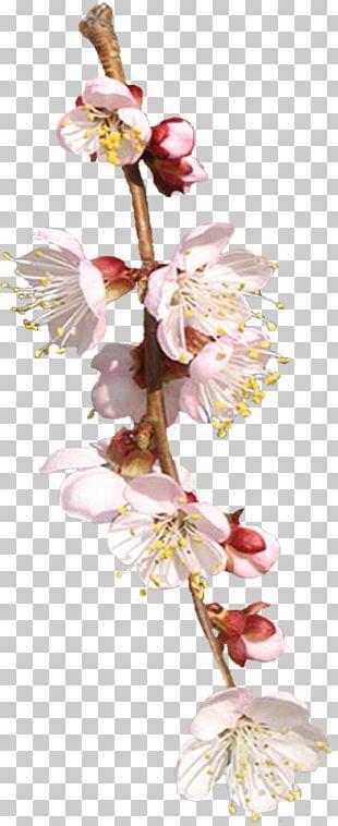 Cut Flowers Floral Design Spring Plant Stem PNG