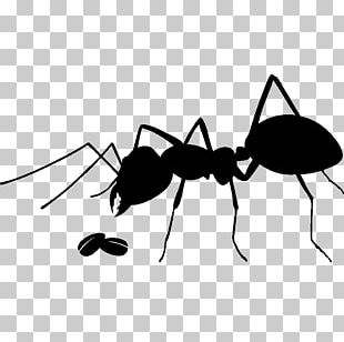 Ant Insect Stock Photography PNG