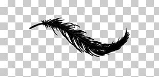 Bird White Feather Irresistible PNG