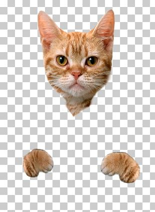 Cat Food Dog Litter Box Hamster PNG