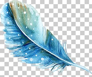 Feather Watercolor Painting PNG