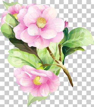 Watercolor Painting Flower Floral Design Art PNG