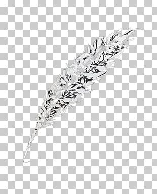 White Black Feather Pattern PNG