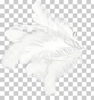 White Feather Drawing Black Pattern PNG