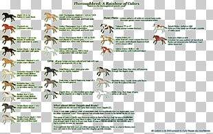 Thoroughbred American Paint Horse American Quarter Horse Equine Coat Color Cream Locus PNG