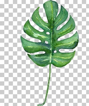 Swiss Cheese Plant Tropics Leaf Watercolor Painting Printmaking PNG