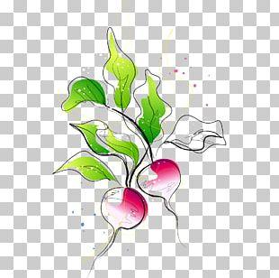 Carrot Vegetable Radish PNG