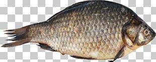 Fish Digital PNG