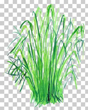 Watercolor Painting Leaf Vegetable Food PNG