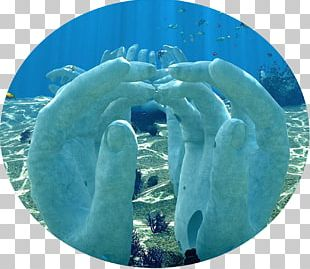 Marine Mammal Marine Biology Water PNG