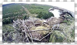 Bird Of Prey Bird Nest Passerine Nuthatch PNG