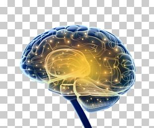 Brain Research Neuroscience Nervous System PNG