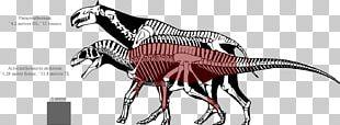 Tyrannosaurus Spinosaurus Dinosaur Size Allosaurus Nanotyrannus PNG