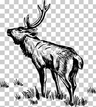 Reindeer Elk Moose PNG