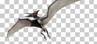 Pteranodon Dimorphodon Pterodactyls Ankylosaurus Jurassic Park PNG