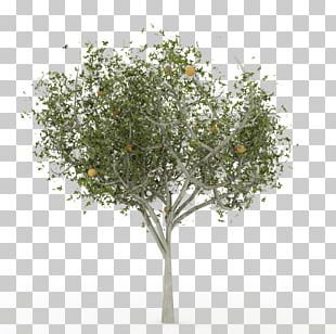 English Oak Tree Silhouette PNG, Clipart, Acorn, Black, Black And