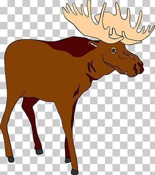 Moose Free Content Stock.xchng PNG