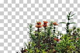 Flowering Plant Tree Shrub PNG