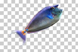 Seabed Marine Biology Fish PNG