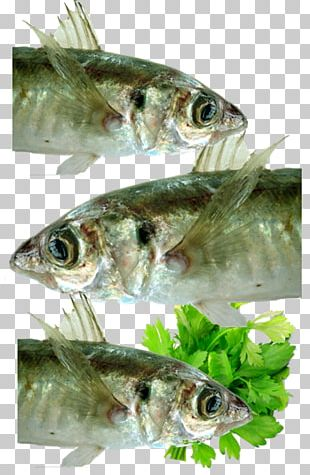 Sardine Fish Products Seafood Oily Fish PNG
