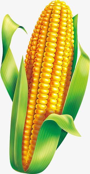 Corn Material PNG