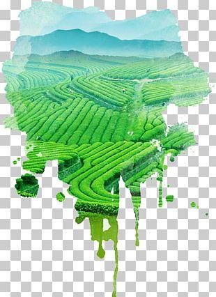 Green Tea Tea Garden Tea Culture PNG