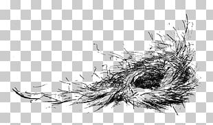 Bird Nest Drawing PNG