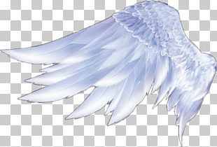 Angel Wings Angel Wings Feather PNG