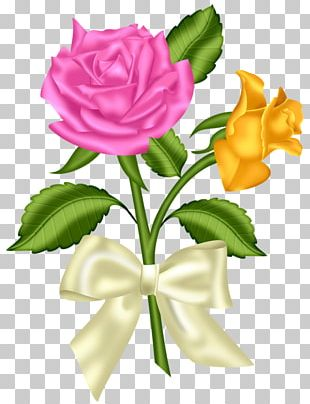 Flower Pink Blue Rose PNG