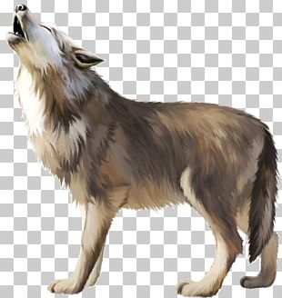 Gray Wolf Icon PNG