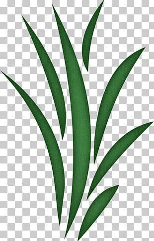 Seaweed PNG