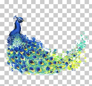 The Peacock Feather Peafowl Drawing Watercolor Painting Illustration PNG