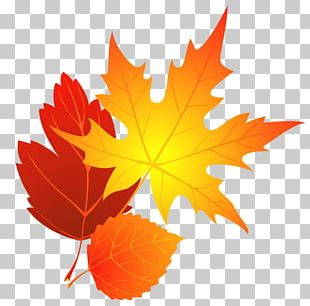 Transparent Fall Leaves PNG