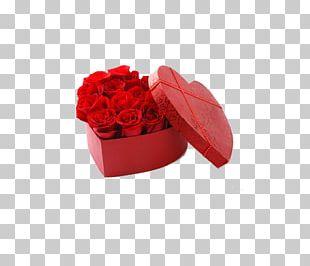 Beach Rose Garden Roses Cut Flowers PNG